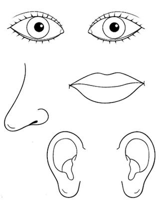 Colorir e explorar os cinco sentidos educa o de infancia for Aprire le planimetrie con una vista